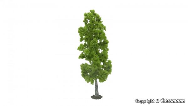 Birke 18 cm